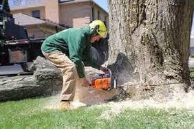 stump removal with a  power saw